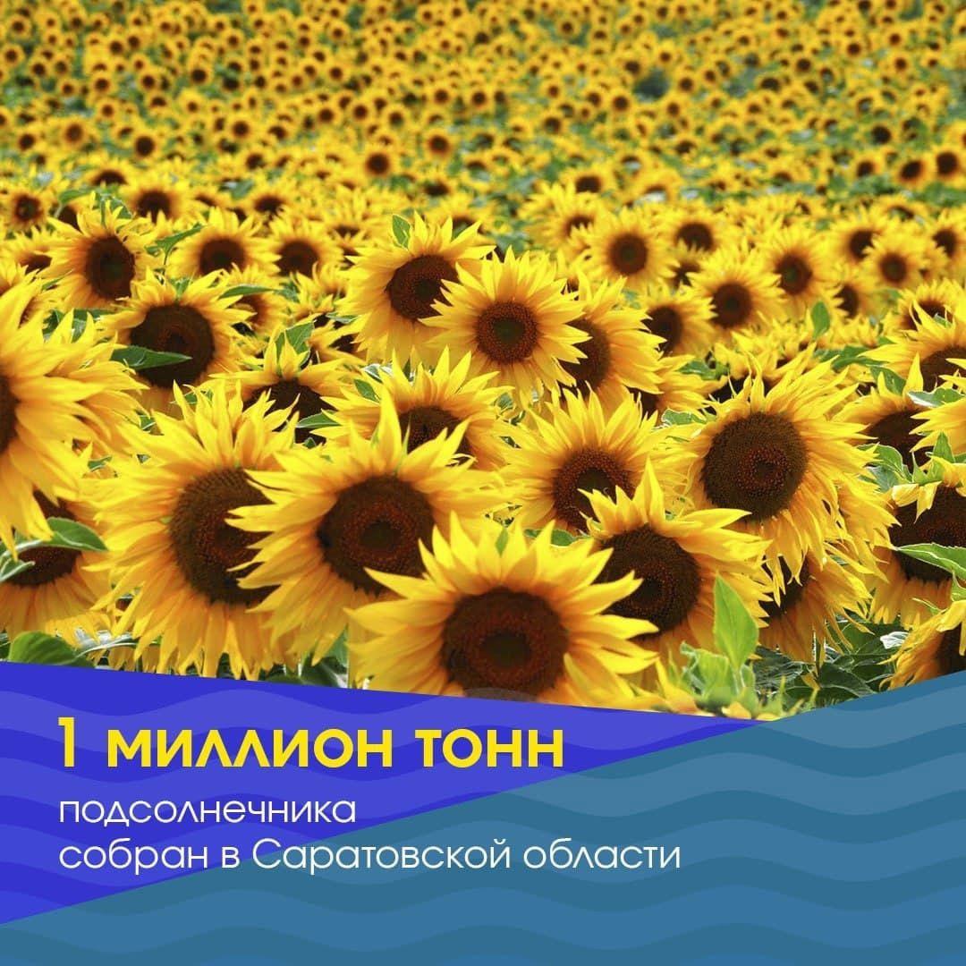 В Саратовской области аграрии собрали миллион тонн семян подсолнечника