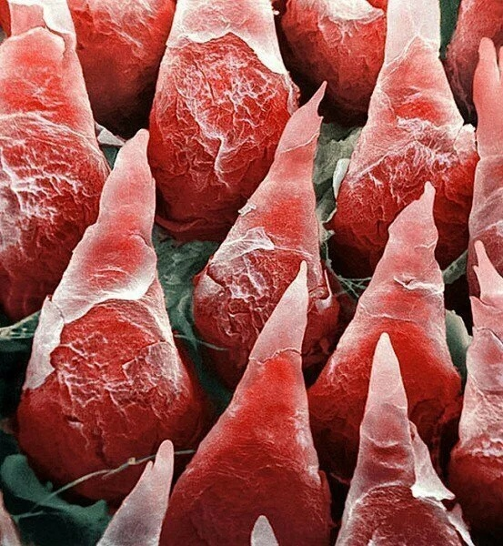 Обычные вещи под микроскопом.Нас окружает фантастический, удивительный и красивый мир за пределами возможностей человеческого зрения