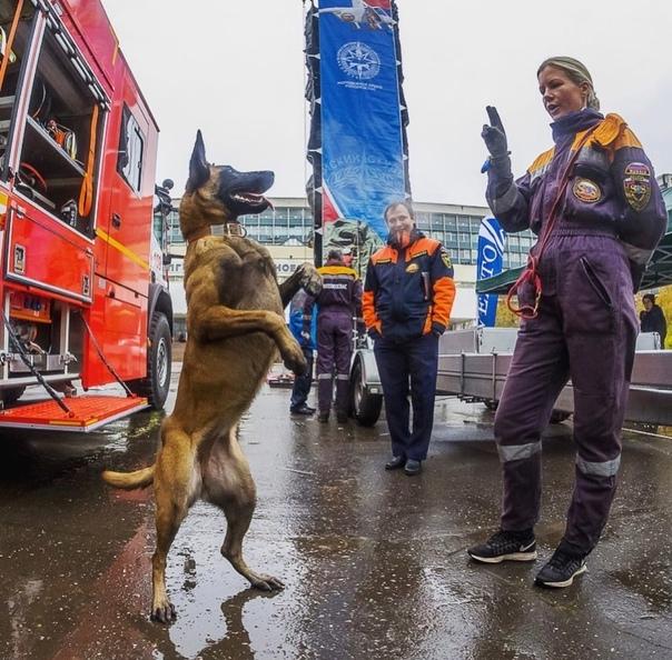 С начала года служебные собаки в Москве помогли сп...
