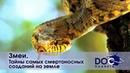 Змеи - Тайны самых смертоносных созданий на земле - Документальный фильм