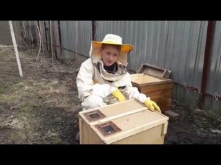 Развитие от пчелопакета до пчелосемьи