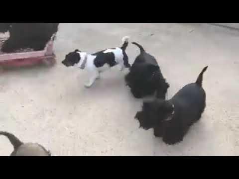 Y cómo se comportan tus perros cuando no estas? Súper biennn los perros..
