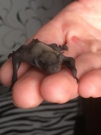 14 Июня в приют принесли очень маленького и не обычного, 2х неделного детёныша летучей