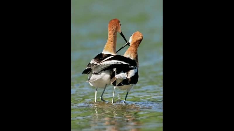 National Geographic лучшие фото природы