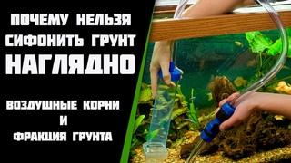 Почему нельзя сифонить грунт в аквариуме, наглядно. Воздушные корни у растений.