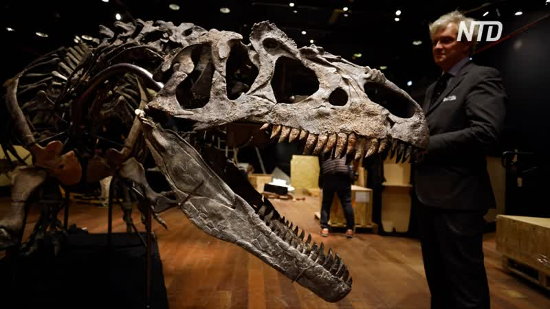 Скелет аллозавра продали на аукционе за 3 млн евро
