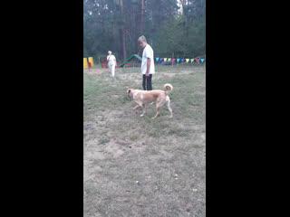 Live: BETTI_DOG Городская Спортивная Школа Дрессировки