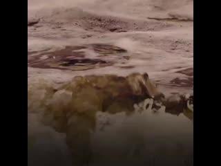 Как на Сахалине спасали тюлененка