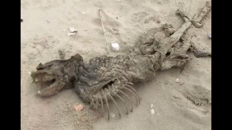 Mystery creature washes up in Charleston SC US government's restricted 'Monkey Island' blamed