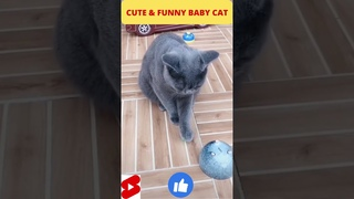 CUTE & FUNNY BABY CAT #SHORTS